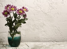 Chrysanthemum flower on the desk Stock Image