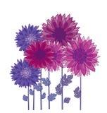 Chrysanthemum flower element. Stock Photos