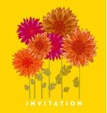 Chrysanthemum flower element. Royalty Free Stock Image