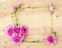 Chrysanthemum flower frame. Royalty Free Stock Photos