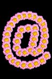 Chrysanthemum flower have arobase shape Royalty Free Stock Photos