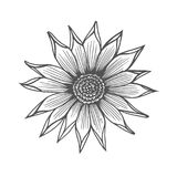 Chrysanthemum flower illustration Stock Photography