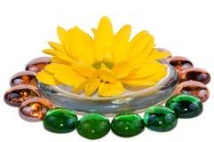 Chrysanthemum flower isolated Royalty Free Stock Photos