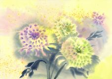 Chrysanthemum flower watercolor background Stock Photography