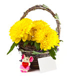 Chrysanthemum flowers in a basket Royalty Free Stock Photo