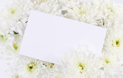 Chrysanthemum flowers with blank card. Copyspace Royalty Free Stock Images