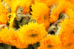 Chrysanthemum flowers and buds Stock Photos
