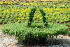 Chrysanthemum flowers Carving Stock Images