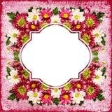 Chrysanthemum flowers frame Royalty Free Stock Photos