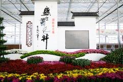 Chrysanthemum flowers Stock Photography