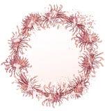 Chrysanthemum frame Royalty Free Stock Photos