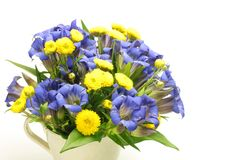 Chrysanthemum and gentian Stock Image