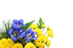 Chrysanthemum and gentian Stock Photos