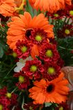 Chrysanthemum and gerbera flowers. Stock Image