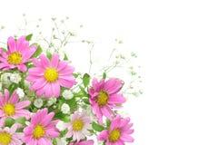 Chrysanthemum and haze grass Royalty Free Stock Images