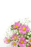 Chrysanthemum and haze grass Royalty Free Stock Image