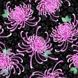 Chrysanthemum illustration Royalty Free Stock Photo