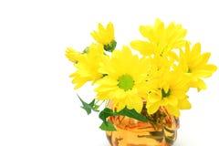Chrysanthemum jaune Photo stock
