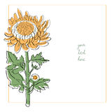 Chrysanthemum minimal card Royalty Free Stock Images