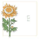 Chrysanthemum minimal card Royalty Free Stock Images