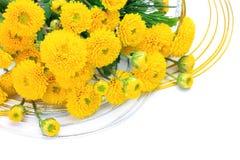 Chrysanthemum and New Year holidays image Stock Photography