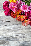 Chrysanthemum on old wooden background Stock Photography