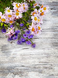 Chrysanthemum on old wooden background Royalty Free Stock Image