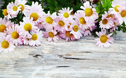 Chrysanthemum on old wooden background Royalty Free Stock Photos