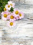 Chrysanthemum on old wooden background Royalty Free Stock Images