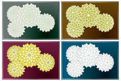Chrysanthemum orient texture variety Stock Photo