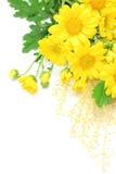 Chrysanthemum and pampas grass Stock Photography