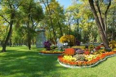 Chrysanthemum parterre Stock Photo