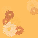 Chrysanthemum Pattern Stock Photos