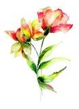 Chrysanthemum and Poppy flowers Royalty Free Stock Photos