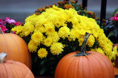 Chrysanthemum and pumpkin Stock Images