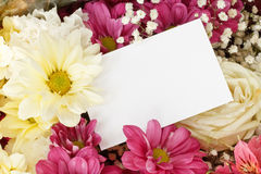Chrysanthemum rose bouquet border Stock Image