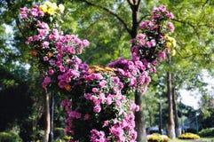 Chrysanthemum sheep Royalty Free Stock Photo