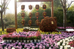 Chrysanthemum show. Plenty of colorful chrysanthemums gathering toghter,dark red ones make up a big tea pot and some Chinese characters of 'TEA'.Location:Jiefang Stock Photo