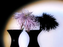 Chrysanthemum in soffits Stock Images