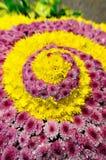 Chrysanthemum in spiralling pattern Royalty Free Stock Images
