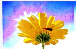 Chrysanthemum sur le papier de vieillissement illustration libre de droits