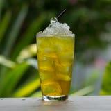 Chrysanthemum tea Stock Photography