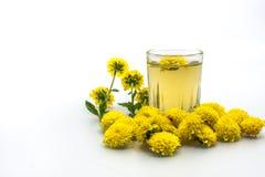 Chrysanthemum Tea Stock Photo