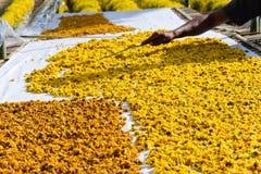 chrysanthemum torkade blommor arkivbilder