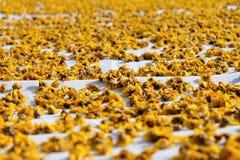 chrysanthemum torkade blommor royaltyfri fotografi