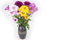 Chrysanthemum in a vase Stock Images