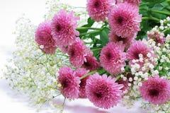 Chrysanthemum violet Photos libres de droits