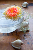 Chrysanthemum in water. And cockleshells Stock Images