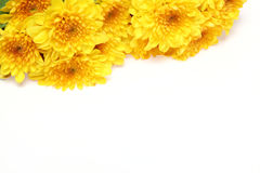Chrysanthemum in a white background Stock Photo