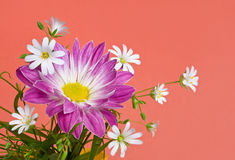 Chrysanthemum with white flowers Stock Photos